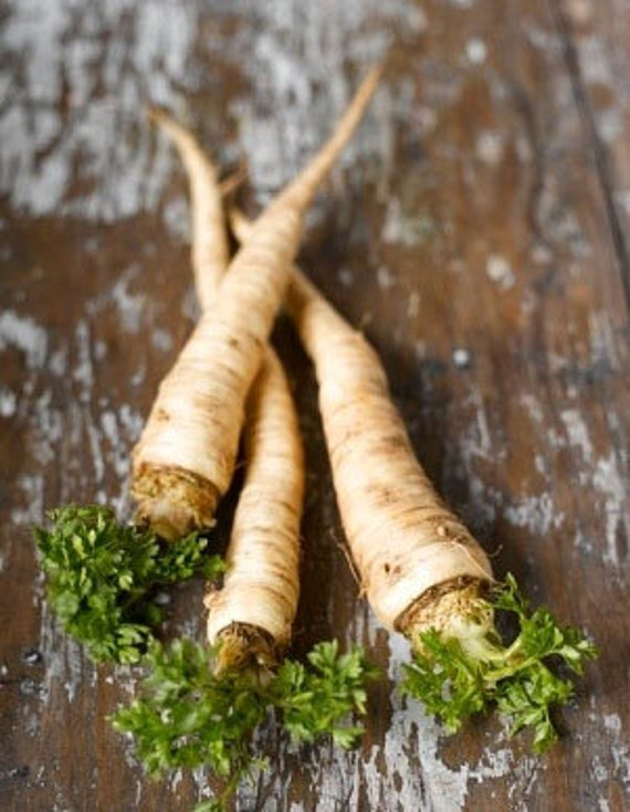 Organic Parsnips Harris Model Heirloom Vegetable Seeds