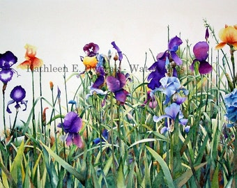 Judy's Irises- signed limited edition watercolor print