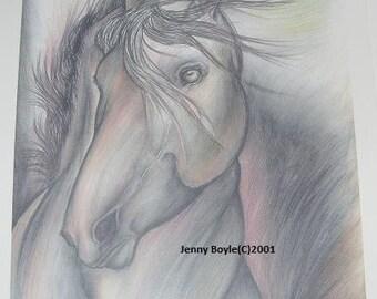 horse colored pencil 11x14 print