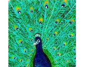 Peacock 5x5 Photo Print 50% Off clearance sale