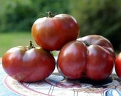 Deep Dark Cherokee Purple Tomato Seeds - Black Organic Heirloom Garden Seed Wonderful Taste