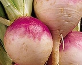 Heirloom Purple Top White Globe Turnip Seeds