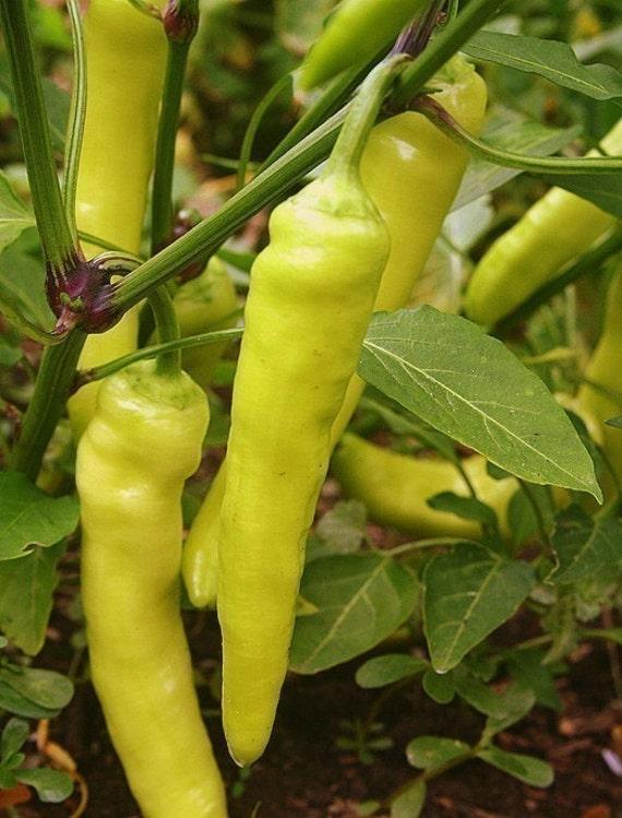 Heirloom Sweet Banana Pepper Seeds
