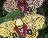 Io Moth Pair  Automeris io Insect  Steam Punk Iron on Patch