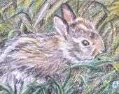 Original ACEO miniature pencil art, wild bunny/rabbit in the grass