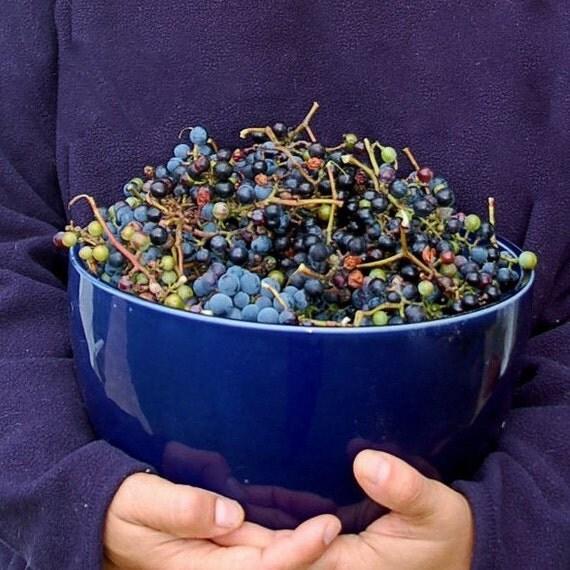 Wild Grape Cardamom Jam - 8 oz.