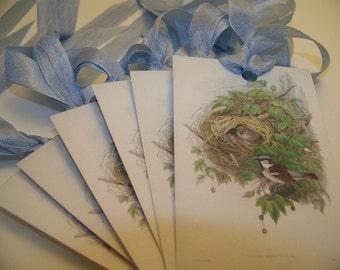 Bird Tags - Sky Blue - Set of 6