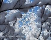 Snowy Branches - 8x8 Fine Art Print