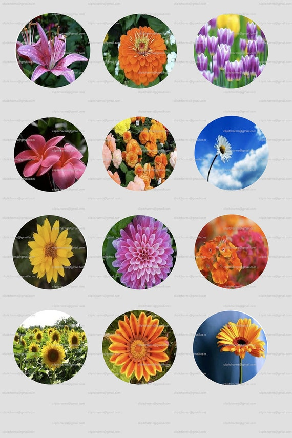 "FLOWERS 1"" Round and 1"" Square Digital Images...4x6"