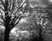 BOGO -- 5x7 Original Photograph Print-- Sunny Tree