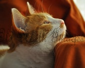 BOGO -- 5x7 Original Photograph Print -- Sunny Cat