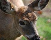Oh Deer 4x6 Photograph