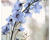 Flower photography Blue Delphinium pastel blue and violet white neutral wall art