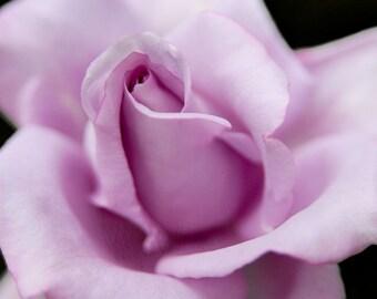 Henslowe's Vision - Rose Flower - 4x6 Fine Art Photograph