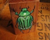 hand-painted beetle on wood