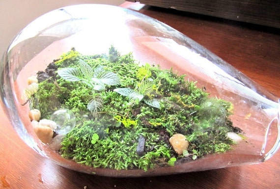 Hand Blown Glass Terrarium Kit-Medium