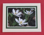 White Wildflower Note Cards