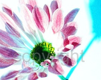 Flower photograph (UK571/0) Limited Edition of 45