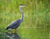 Heron on Woodcock Lake - Fine Art Photograph