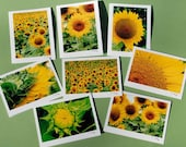 8 Pack of 8 different Sunflower Cards