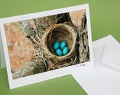 Robin Nest and Eggs Photo Note Card