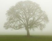 "Lone Tree Photo ""The Solitary One"" Tree Art, Green Nature Photography, Bare Tree in Fog White Winter Tree Picture Wall Decor, Oak Tree Print"