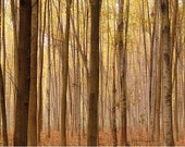 "Fall Colors Nature Photography ""Lost in the Woods"" Photo,Autumn Photo,Fall Art,Autumn Print,Fall Photo,Gold Brown Wall Decor  Tree Print"