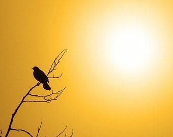 "Nature Photography ""Good Morning Sunshine"" Yellow Bird Print, Black Bird Art,Bird Photo, Simple Modern Wall Decor  Bird Photography Print"