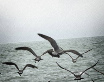 """Ocean Bird Nature Photography """"Off to Sea"""" Seagull Flock Gray Sea Photograph - Black and White Photo Landscape Home Wall Decor  Art Print"""