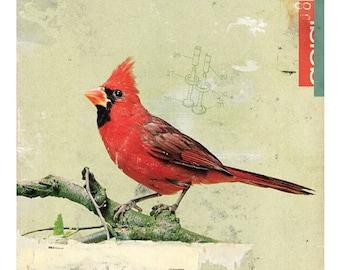 Bird No.6