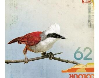 Bird No.3