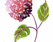 Pink Hydrangea Watercolor Print