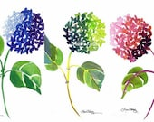 Hydrangea Watercolor Prints - Set of Three