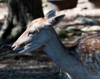 Sunlit Deer Close-up - 5x7 Original Signed Fine Art Photograph