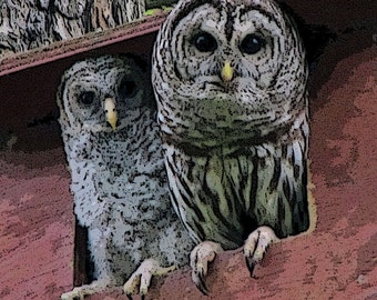 Barred Owl Mother and Daughter