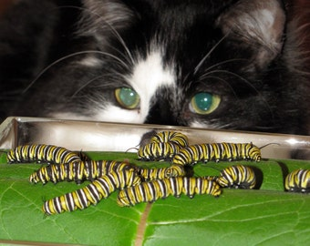 Cat and caterpillars