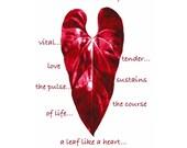 Heart Like A Leaf, Maroon digital photo art card 5x7 with envelope
