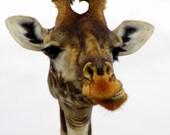 Giraffe, Gentle Giant