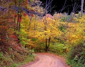 Road Less Traveled 4x6 Tribute to Robert Frost Fine Art Color Photograph
