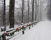 Winter Snow Scene Photograph 4x6 Deck the Trail Print Christmas Photo