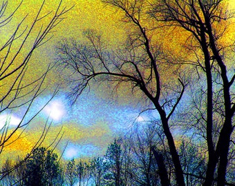 Etched in Gold 8x10 Abstract Art Tree Photograph