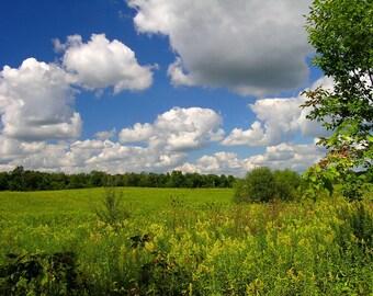 Landscape Photograph - Field of Dreams 8x10 Ohio Nature Scene