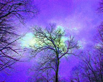 Gothic Tree Photography 4x6 Fine Art Photograph Statement in Violet Print