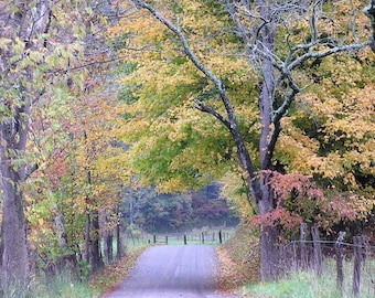 Nature Photography 5x7 Leaf Harvest Road Autumn in Ohio Fall Foliage Photo