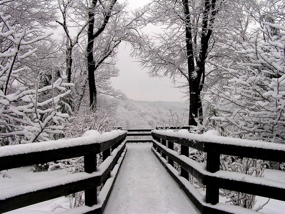 Winter Landscape Photograph 11x14 Black and White Photography, Snowfall Symmetry, Wall Art Home Decor