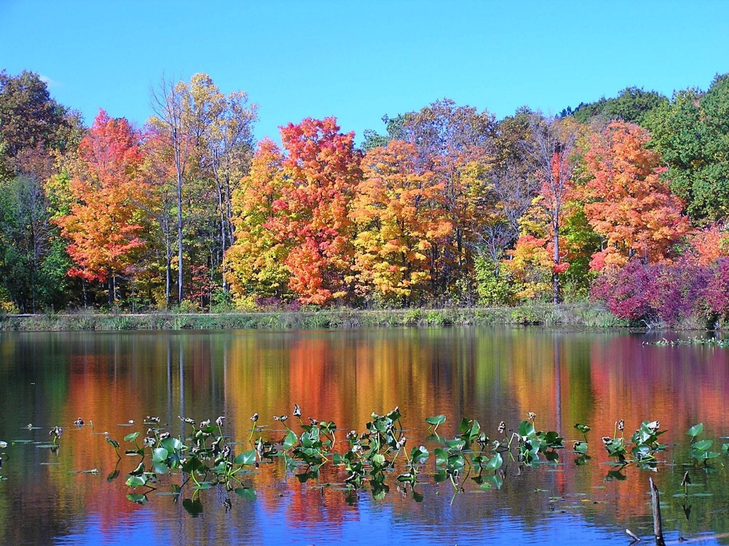 autumn fall reflection pond nature trees tree leaves 8x10 ohio 4x6 5x7 decor landscape colorful photograph snow scenery etsy glad