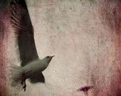 Pink Bird Photography Print - Untitled Bird - Seagull in Flight in Coney Island