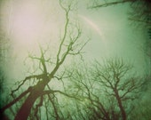 Green Skeletal Trees in Prospect Park Holga Photo Print , Burn - Frankenkitty