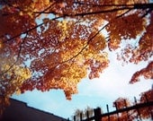 Fall Photography, And Now a Message from Autumn, Beautiful Orange Leaves Holga Photo Print