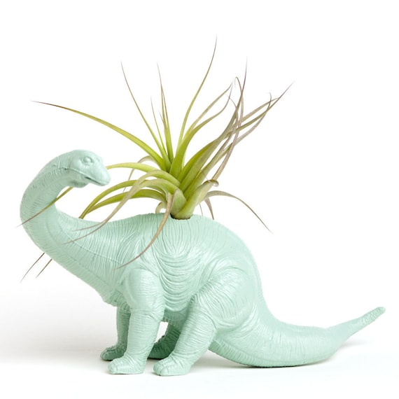 Dinosaur Planter With Air Plant Room Decor College By